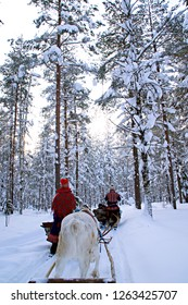 Woman at reindeer safari in winter forest in Lapland Finland