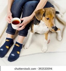 Woman relaxing with beagle puppy and  tea cup