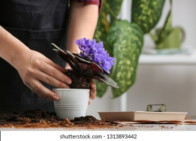 Woman repotting fresh plant at table