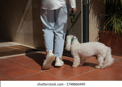 A woman returns from a walk with a white dog. Close-up of the leg