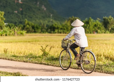 Woman in a rice hat riding a bicycle in a ricefield near Lac Village, Mai Chau valley, Vietnam. Beautiful fall sunset during harvest time.