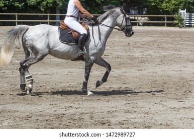 Woman riding a gray horse at trot