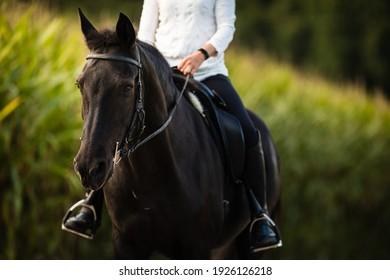 Woman riding a horse. Equestrian sport, leisure horse riding concept