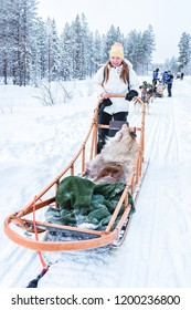 Woman riding Husky dog sled in Finland in Lapland in winter.
