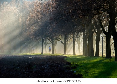 A woman running through a foggy sun ray lit park path. The path is surrounded  by a beautiful avenue of trees.