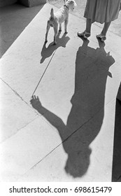 Woman with schnauzer dog casting shadow on pavement