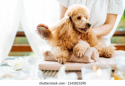 Woman scratching dog with a brush. Spa still life with aromatic candles, flowers and towel.