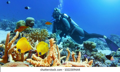 Woman scuba diver admiring beautiful coral reef and a couple of beautiful yellow coral fish