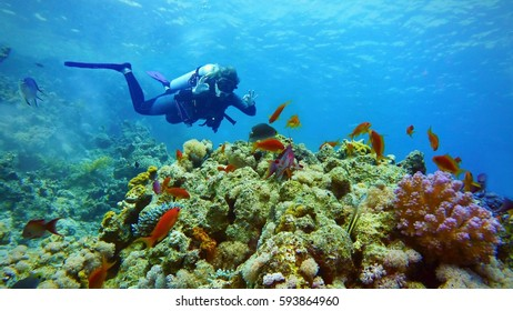 Woman scuba diver and coral reef with fish