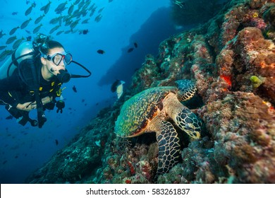 Woman scuba diver exploring sea bottom. Underwater life with beautiful corals and hawksbill turtle