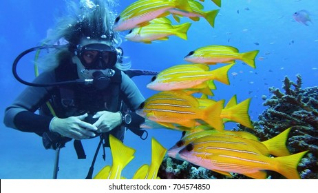 Woman scuba diver with shoal of beautiful yellow coral fish