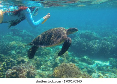 Woman and sea turtle swimming in blue water. Cute sea turtle in blue water of tropical sea. Green turtle underwater photo. Wild marine animal in natural environment. Endangered species of coral reef.