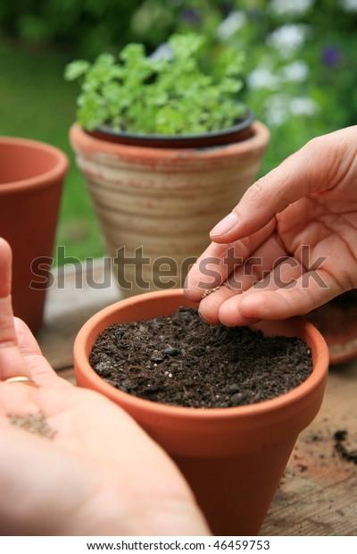 Woman seeding herbs