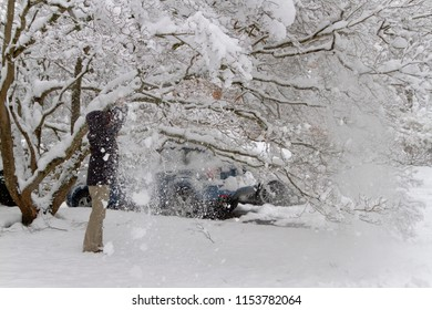 A woman shakes a blizzard of cascading snow off a dogwood tree's branches in the attempt to lighten its heavy,snow laden branches covering her car