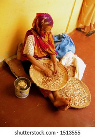 Woman shelling nuts from the argan tree (argania spinosa), which grows only in Morocco despite efforts to cultivate it elsewhere. The resulting oil is slightly darker than olive oil.