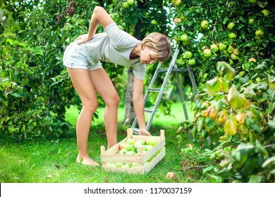 Woman with short hair with a strong pain in low part of the back while collecting apples in the garden. Medicine, healthcare and people concept