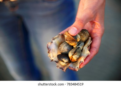 A woman showing seafood (molluscs/cockles) caught at tidal area of the waddensea, Holland