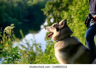 Woman with Siberian husky dog outdoors