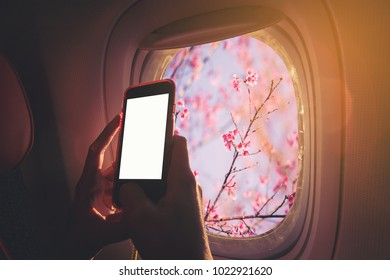Woman sitting by aircraft window and using a digital mobile during the flight. Cherry flowers as seen through window of an aircraft.