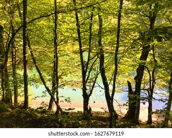 Woman sitting on the ground and leaning to a tree near Lake Nazli,  Yedigoller National Park, Bolu, Turkey.