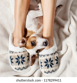 Woman in slippers with dog.Soft comfortable home slipper