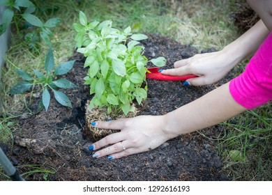 Woman smile and hand holding tree prepare plant on ground for environment