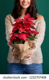 Woman smiling holding out christmas plant wrapped as a gift present