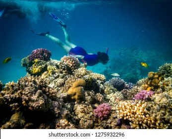 Woman snorkeling in the Coral reef in Marsa Alam, Red Sea, Egypt