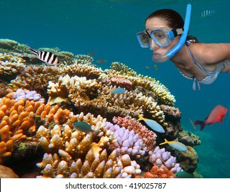 Woman snorkeling dive in the Great Barrier Reef in the tropical north of Queensland, Australia