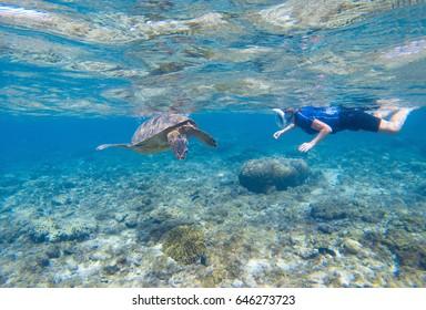 Woman snorkeling with sea turtle. Turtle and snorkel underwater. Snorkeling in tropical seashore. Shallow water animal. Cute turtle underwater. Tropical island vacation. Marine tortoise swim undersea
