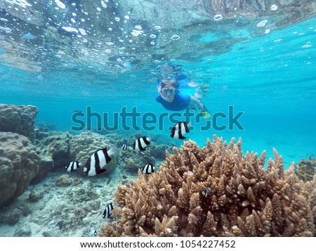 Woman snorkelling with Dascyllus aruanus fish in Rarotonga, Cook Islands. Real people. Copy space