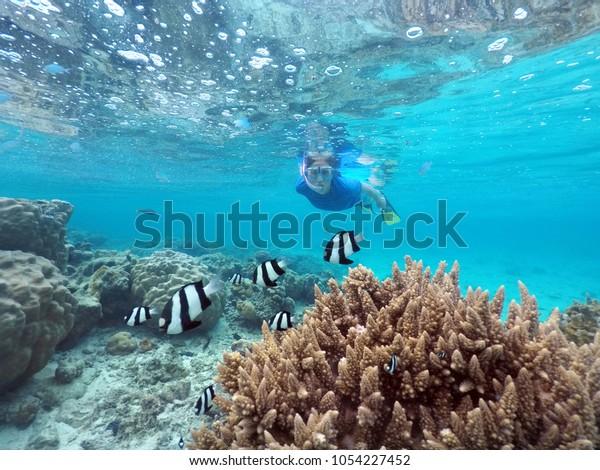 Woman snorkelling with Dascyllus aruanus fish in Rarotonga, Cook Islands. Real people. Copy space