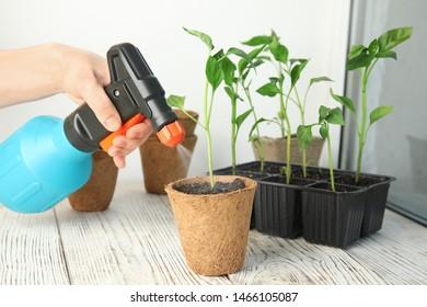 Woman spraying vegetable seedlings on wooden window sill, closeup