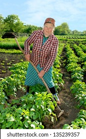 Woman spud young shoots potatoes to increase yield