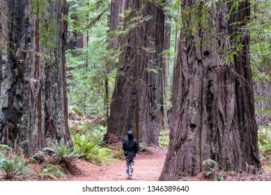 Woman standing among giant redwood trees in Humboldt Redwoods State Park in California
