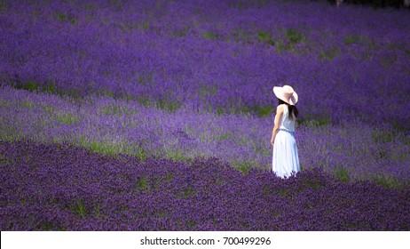 A Woman Standing in Lavender Field at Tomita Farm, Furano, Hokkaido, Japan