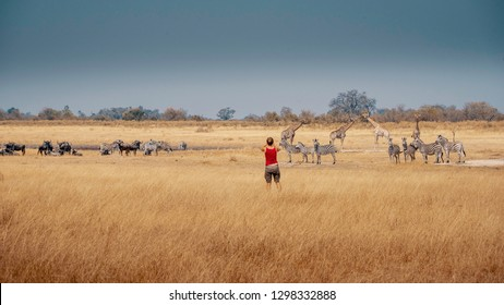 Woman standing in the wild and takes picture of a mixed group of zebras, giraffes and wildebeests in the grassland of Moremi National Park, Okavango Delta, Botswana