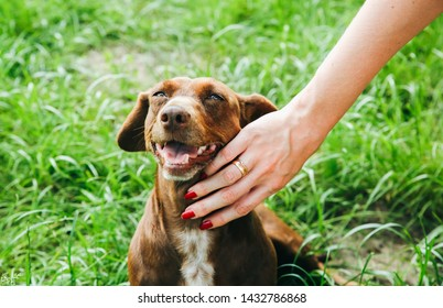 Woman is stroking dachshund dog on the grass. Happy pet in the nature. Summer mood.