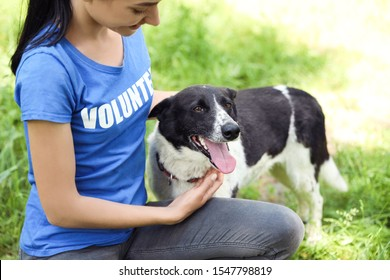 Woman stroking homeless dog outdoors. Concept of volunteering
