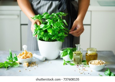 Woman in style apron holding pot with fresh organic basil, white kitchen interior design. Copy space. Lifestyle concept