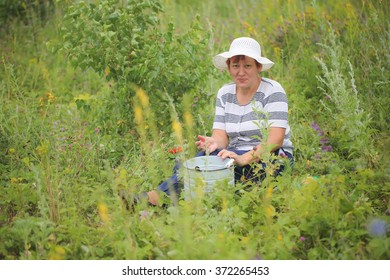 woman in a summer field collects berries