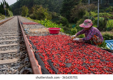 Woman sun drying pepper alongside railroad track. Busan, South Korea.