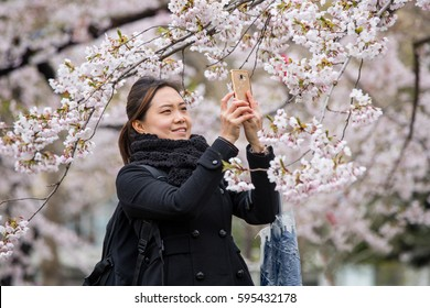 an woman take photo cherry blossom with mobile in garden Hokkaido Japan.