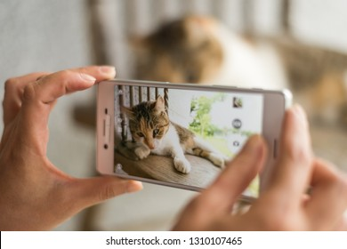 woman take a picture of a little cat