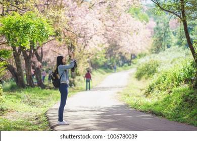 Woman take a sakura cheery blossom photo