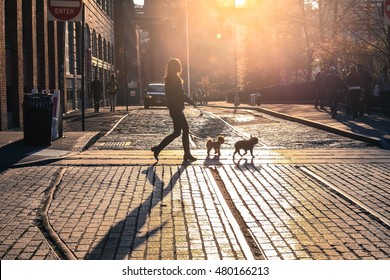 The woman take a walk with dogs at sunset on Brooklyn street, New York City, USA