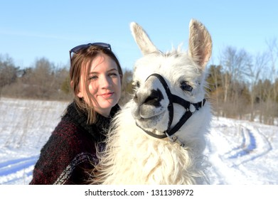 A woman takes her white Llama for a refreshing walk outside.