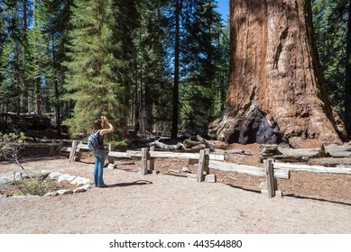 woman takes a picture of  giant tree, Sequoia National Forest