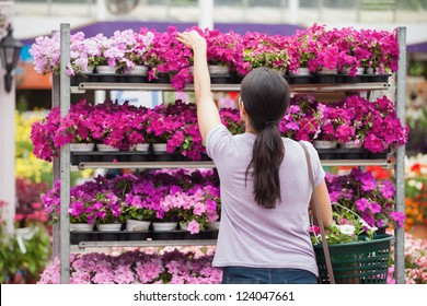 Woman taking a plant from the shelves