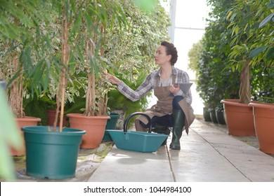 woman tending plants in nursery holding tablet pc
